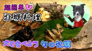 牡蠣🍸レンジで殻むき&簡単料理🍴犬のオヤツにも🐶How to Open Oysters💕Oyster dishes🍴Easy recipe🎵