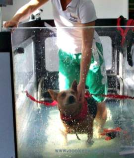 A float tank. For Dogs. No more need be said about this.