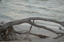 FLORIDE29