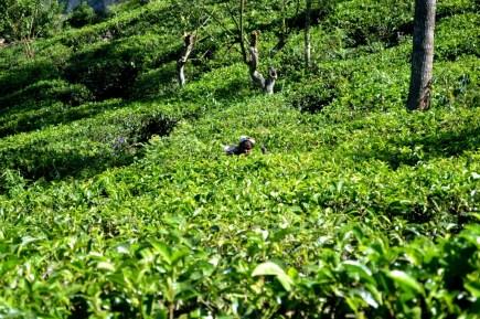 srilanka15