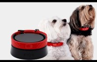 Top 5 Gadgets your Pet Must Have – 6