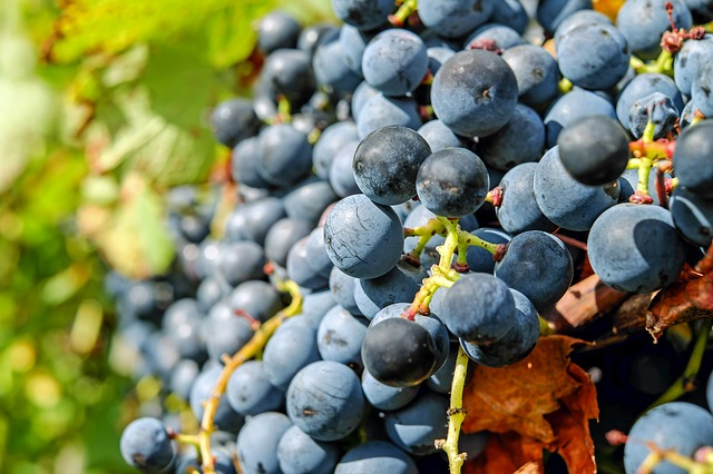 looking for an education on wine check out these tips - Looking For An Education On Wine? Check Out These Tips!