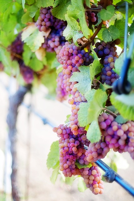 having trouble choosing a wine check out these ideas today - Having Trouble Choosing A Wine? Check Out These Ideas Today!