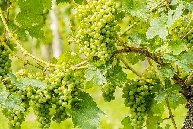 ideas and tips about wine in the following article - Ideas And Tips About Wine In The Following Article