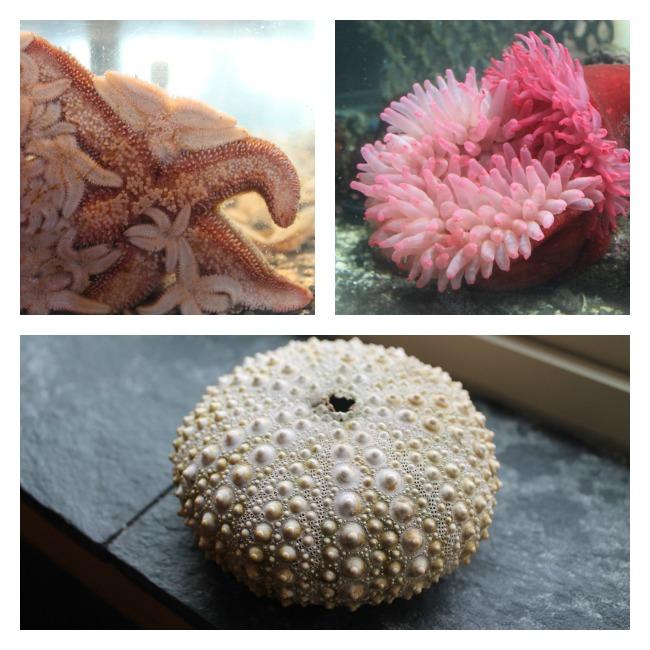 ucluelet aquarium collage