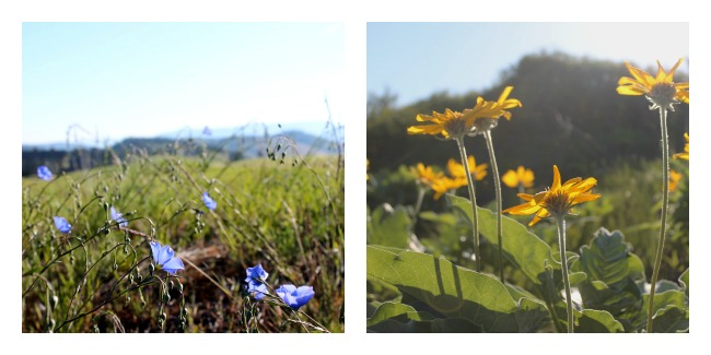 predator ridge flowers