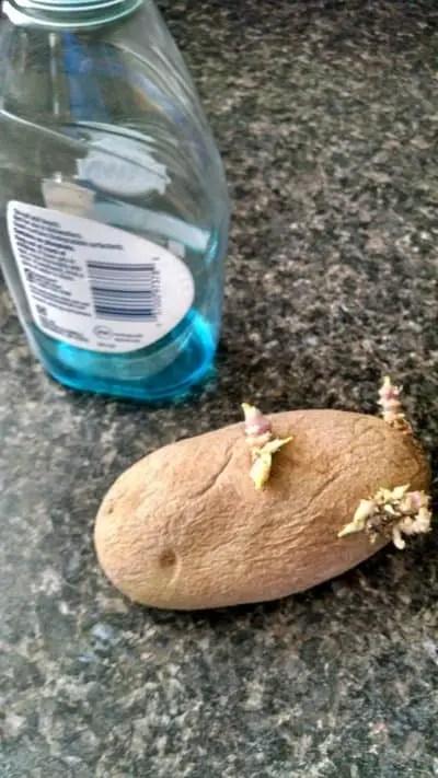 How To Scrub Potatoes : scrub, potatoes, Should, Potatoes, Soap?, Cooking, Chops