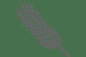 Grains en francais wheat image.