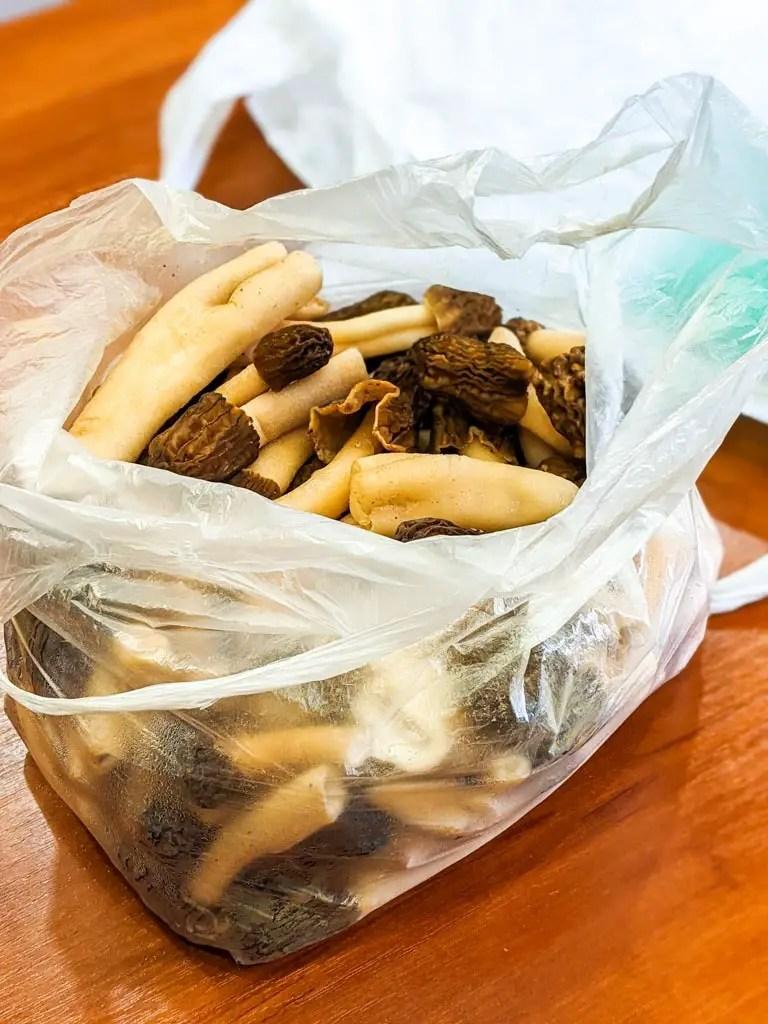 bag of fresh verpa bohemica mushrooms bought in Ukraine