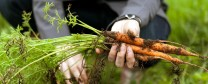 Why Farm to Table Isn't Enough   NYT