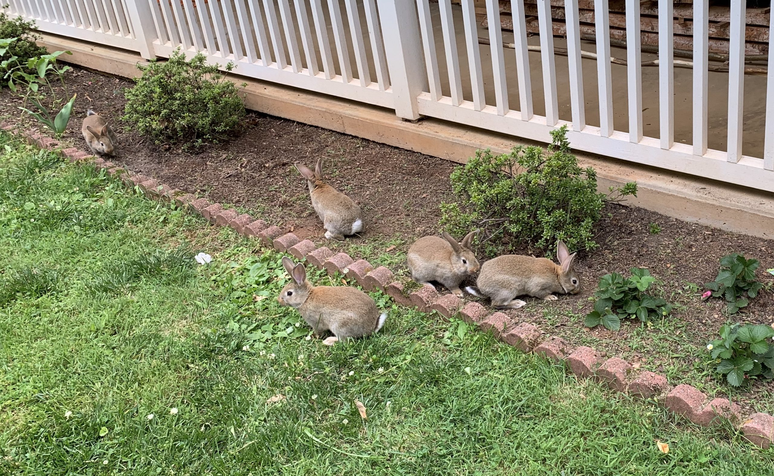 Four rabbits in a flowerbed