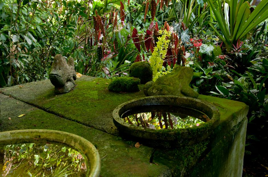 WS Merwin Garden  Cook Jenshel Photography