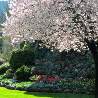 gardens galore: spring at butchart gardens