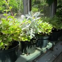newfoundland botany