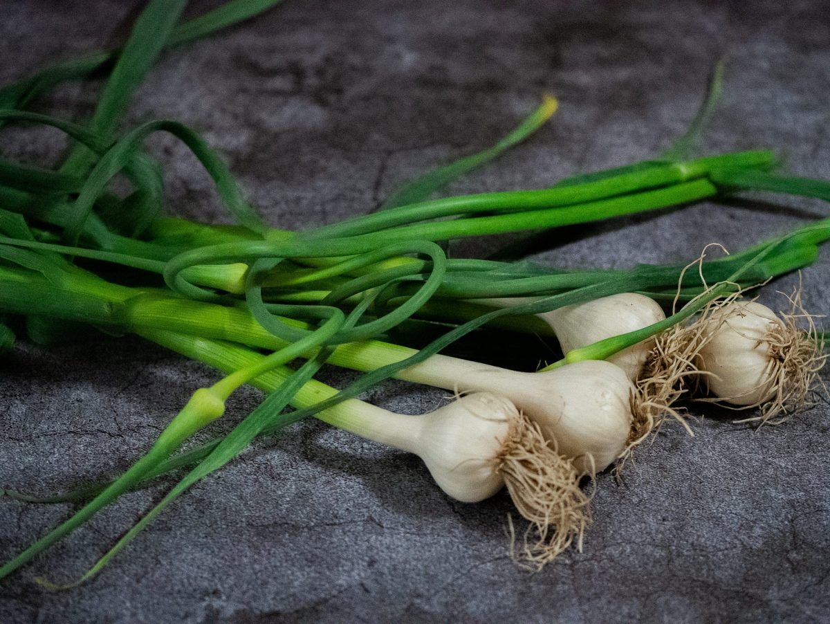 Young garlic bulbs and garlic scapes on a cement working space.