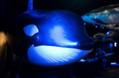 whalefest-10
