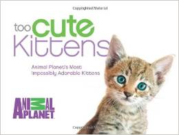 Too Cute Kittens by Animal Planet
