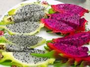 dragon-fruit-1813426_640