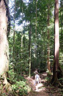 trails Kubah National Park