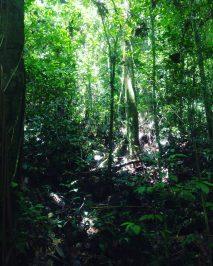 nature Kubah National Park