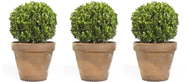 boxwood-topiaries_article
