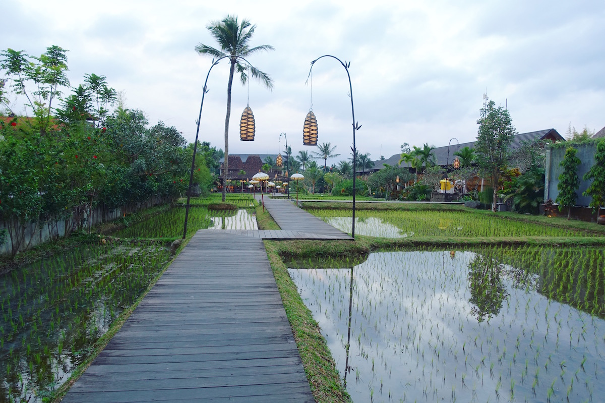 Ubud a great hub to explore Bali