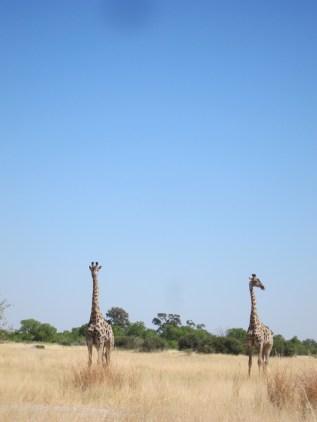 girafe travel africa