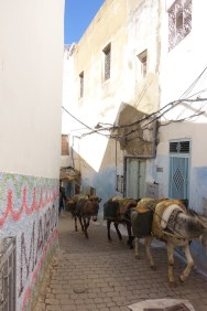 Moulay Idriss donkey vegan