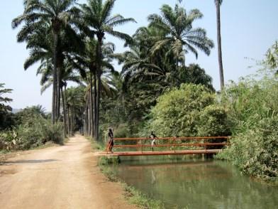 Angola catumbela