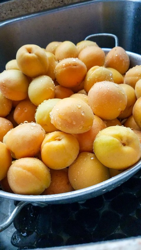 a strainer full of just washed fresh apricots