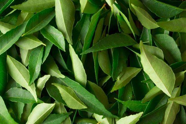 Storing Curry Leaves (Kadi Patta)