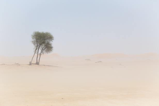 A desert scene in a sandstorm, some palm trees are swaying in the wind