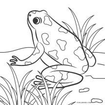 Free Printable Frog Coloring Pages For Kids Cool2bKids