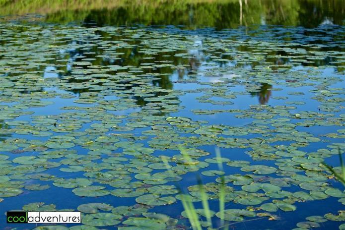 Idyllic natural setting of Madden's Resort, Brainerd, Minnesota