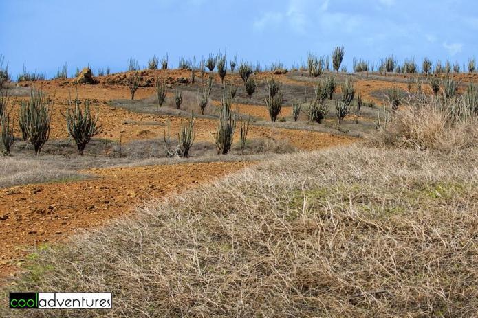 Bara di Karta nature park, Rancho Washikemba, Bonaire