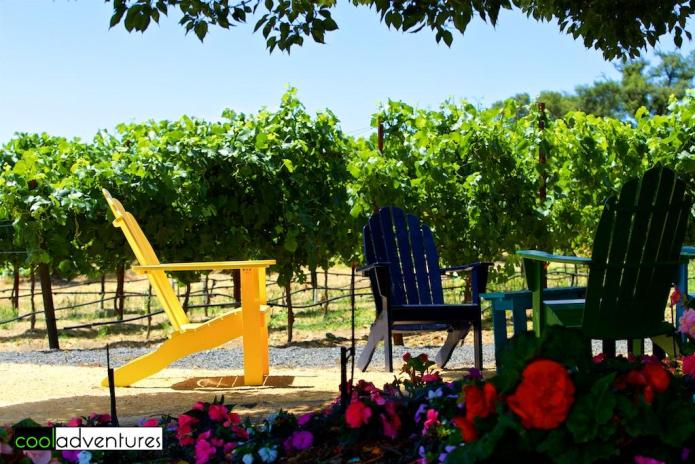 Relax in a chair near the vines at Martin Ray Winery