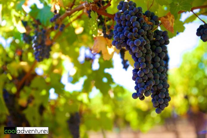 Santa Cruz wineries