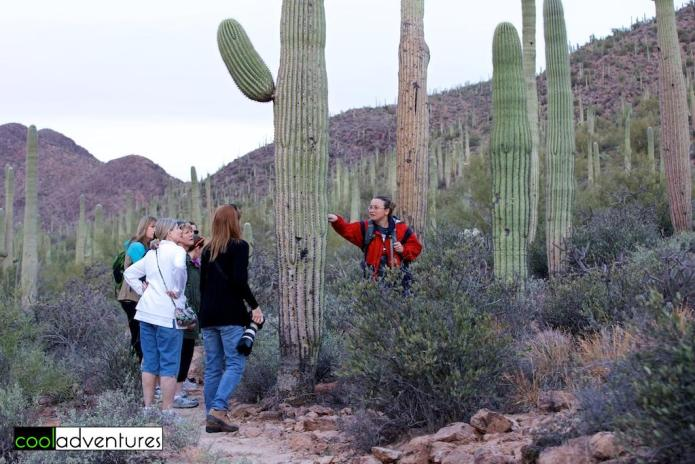 Learning about the saguaro cactus on the morning hike at Starr Pass