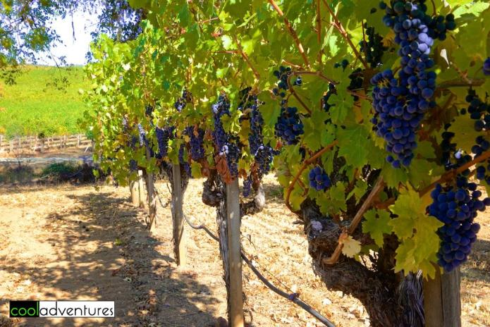 Michel-Schlumberger winery, Sonoma Country, California