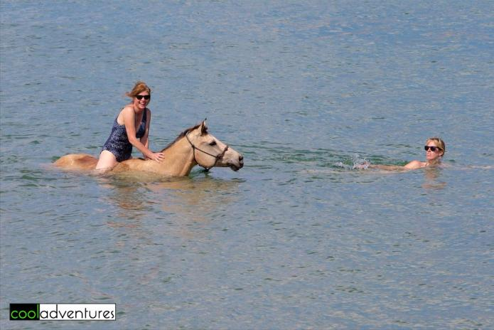Swimming with horses at Rancho Washikemba, Bonaire