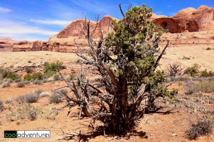 Corona Arch Trail, Moab, Utah
