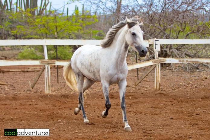 Sophia First of July, Rancho Washikemba, Bonaire