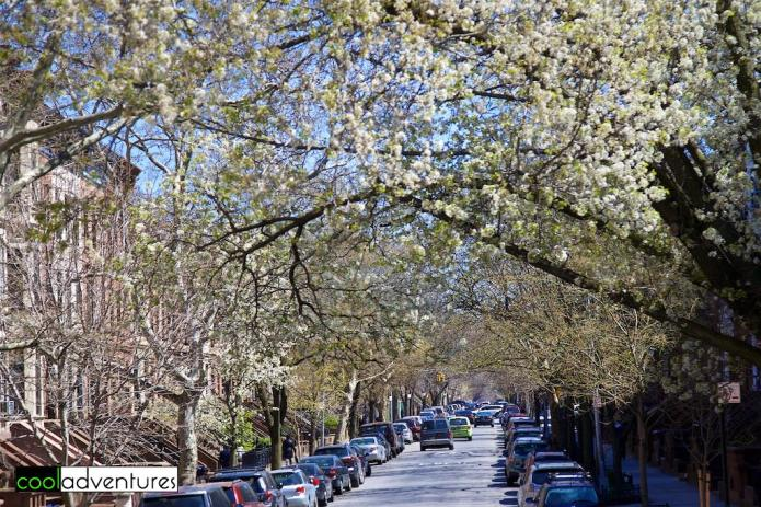 Spring in Brooklyn, New York