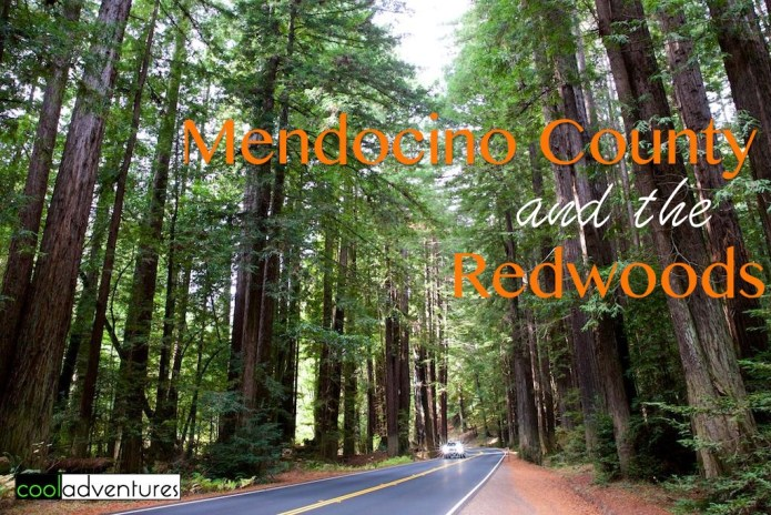 Mendocino County and the Redwoods