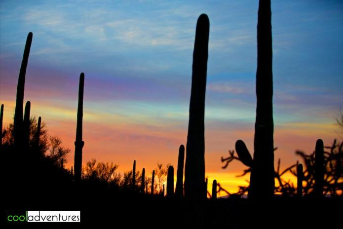 Sonoran Desert sunrise, JW Marriott Starr Pass, Tucson, Arizona