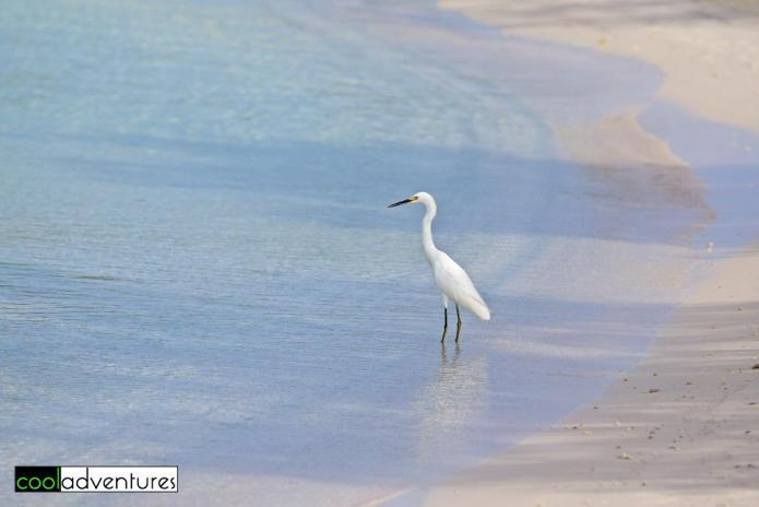 Wildlife at Santa Barbara Resort in Curacao