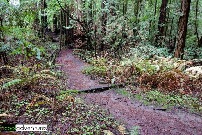 Hiking, Santa Cruz, California