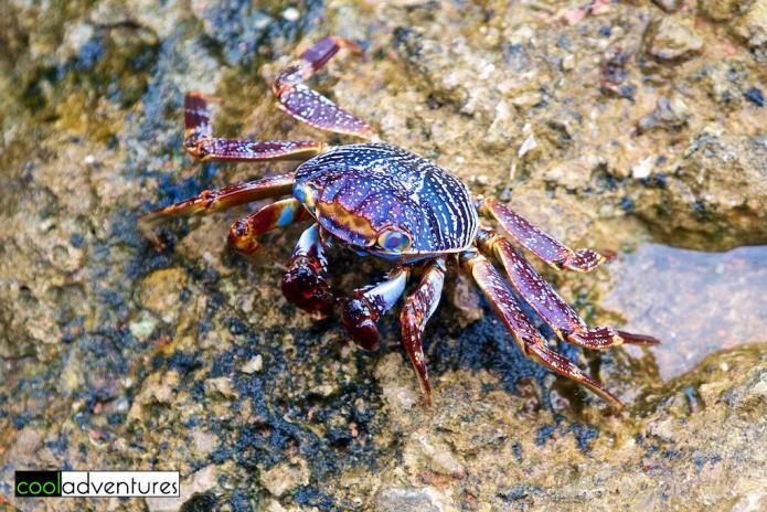 Crab, Bonaire