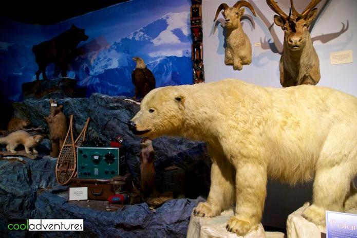 Polar bear exhibit, Buckhorn Saloon and Texas Ranger Museum, San Antonio, Texas