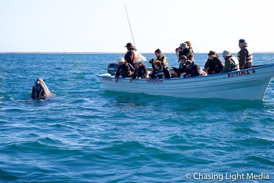 BirdQuest Searcher passengers observing a gray whale